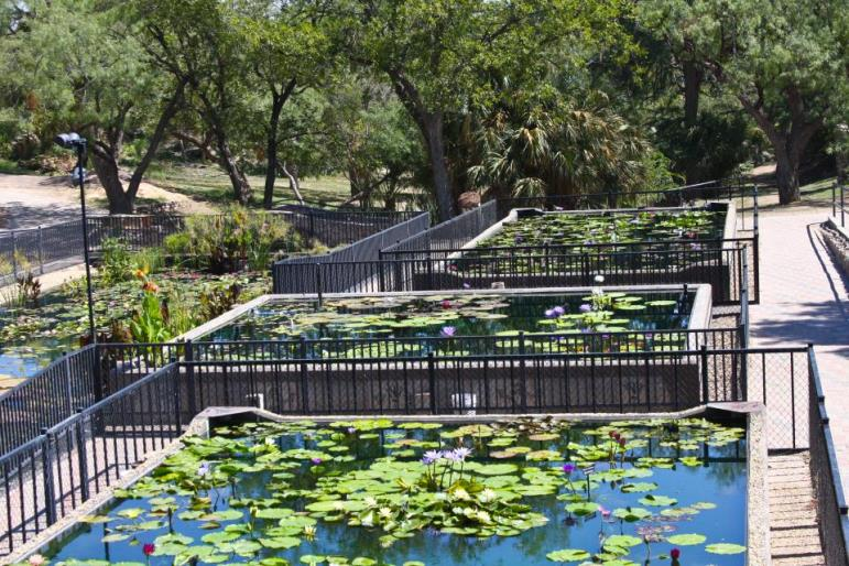 Civic League Park - Water Lily Collection (1)