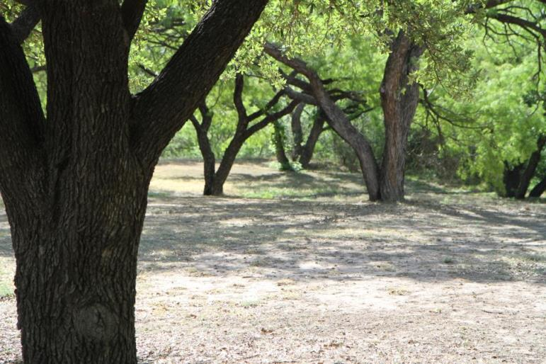 North Concho Park (1)